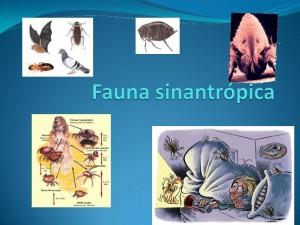 Animais Sinantrópicos